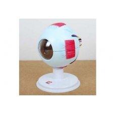 6 dalių žmogaus akis (4x didesnė negu natūralus dydis)