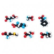 Amino rūgščių molekulinė struktūra, 8 modeliai,molymod®