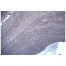 Fosilijų (iškasenų) ir meteoritų objektiniai stikleliai mikroskopui (4 vnt.)