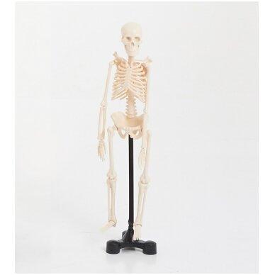 Mini skeletas - 460 mm 2
