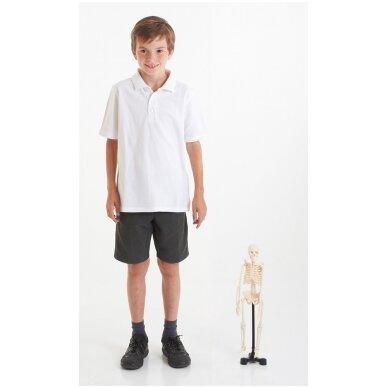 Mini skeletas - 460 mm 3