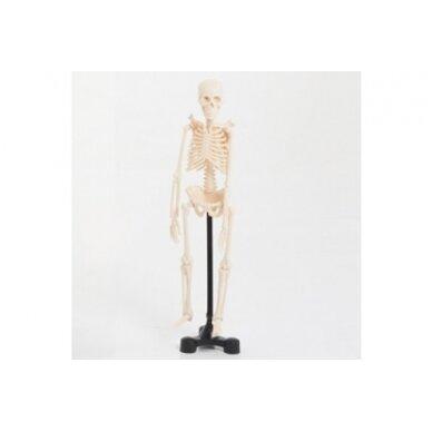 Mini skeletas - 460 mm