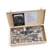 Stratigrafinė kolekcija, 40 fosilijų