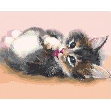 Tapybos pagal skaičius rinkinys Mielas katinėlis