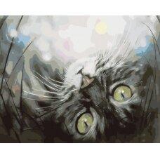 Tapybos pagal skaičius rinkinys Svajinga katytė